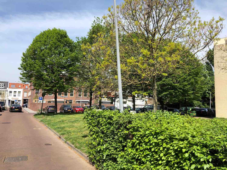 Mooie perkjes om aan te wonen in het Florapark in het Haarlemmerhoutkwartier in Haarlem