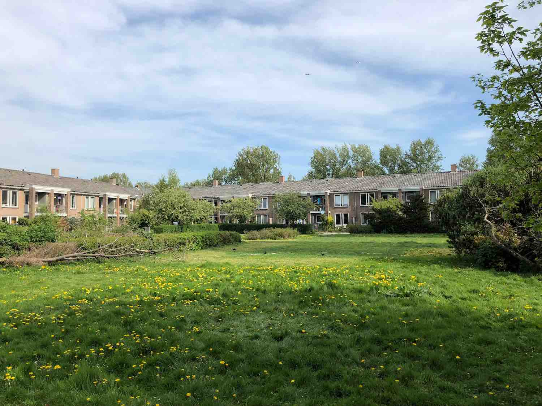 Sociale huurwoningen in de Natuurkundigen buurt in Haarlem Zuidwest