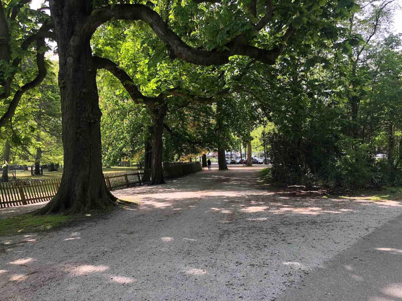 Vanuit je koopwoning in de Haarlemmerhout in Haarlem wandel je heerlijk het park in.
