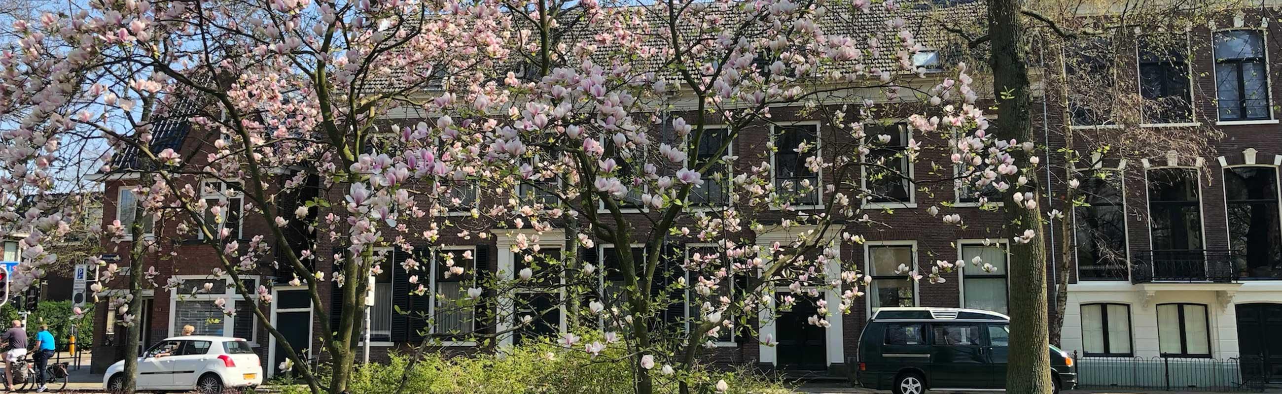 Koopwoningen met fruitbomen voor de deur. Heerlijk wonen aan een park.
