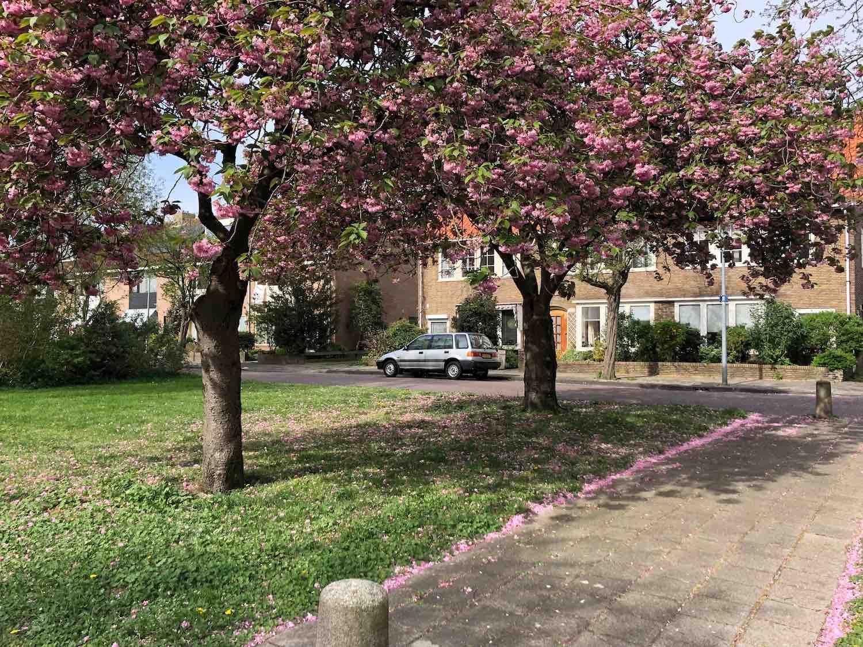 Koopwoningen naast een mooi perkje met bomen in de voorjaarsbloesem in het Houtvaartkwartier