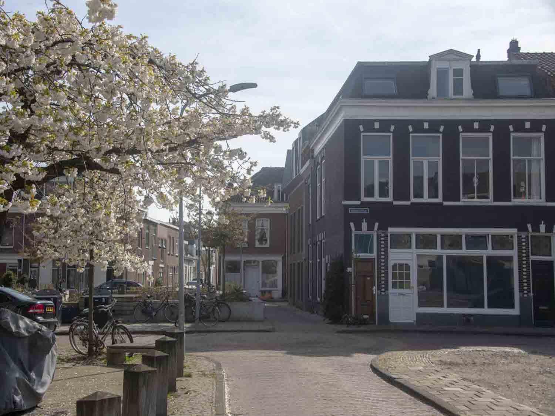Leuk buurtje met koopwoningen in het Rozenprieel in Haarlem Zuid in het Haarlemmerhoutkwartier