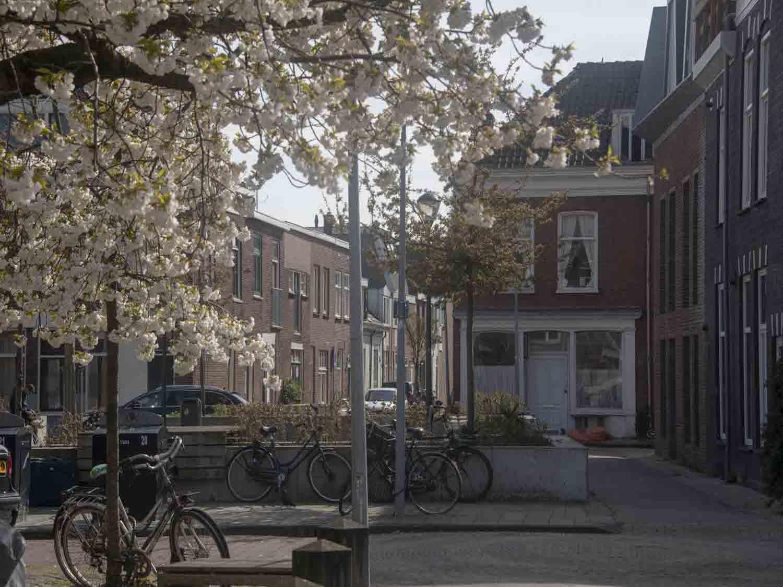 Woningen te koop aan en perkje met bloesem in het Rozenprieel in Haarlem Zuid in het Haarlemmerhoutkwartier